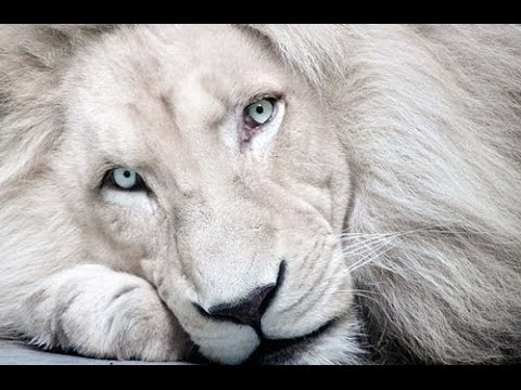 Top 10 Amazing and Rare Albino Animals