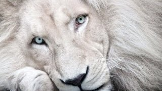 Top 10 Amazing and Rare Albino Animals