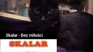 Kolaż kotek 🐈 + teledysk do  🇵🇱 piosenki 🎶 Bez miłości, zespołu Skalar. Czas ⏱ filmu 🎞 4:42