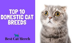 Top 10 Domesticated Cat Breeds for First Time Owners