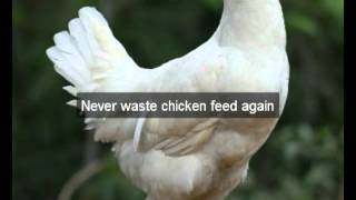 Chicken Feeders | Merced | Ca | Automatic Chicken Feeder | Feeding Chickens | Poultry Feeders|hens