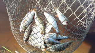 Рыбалка на червя(Рыбалка на червя Группа Вконтакте видео канала Сан Саныча - https://vk.com/sasha4e Мужик готовит! Друзья вступайте..., 2016-01-08T03:00:00.000Z)