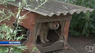 Домашние собаки в Могилёве покусали сотрудниц рассчётно-кассового центра