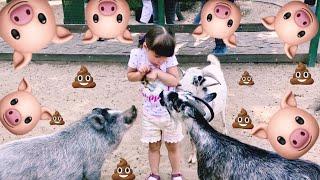 КОЗА   ДЕРЕЗА ПОДРАЛАСЬ С ОВЦОЙ  Контактный зоопарк  Feldman ecopark часть 4  ВЛОГ