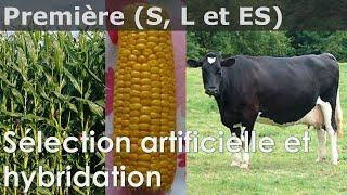 Sélection artificielle et hybridation