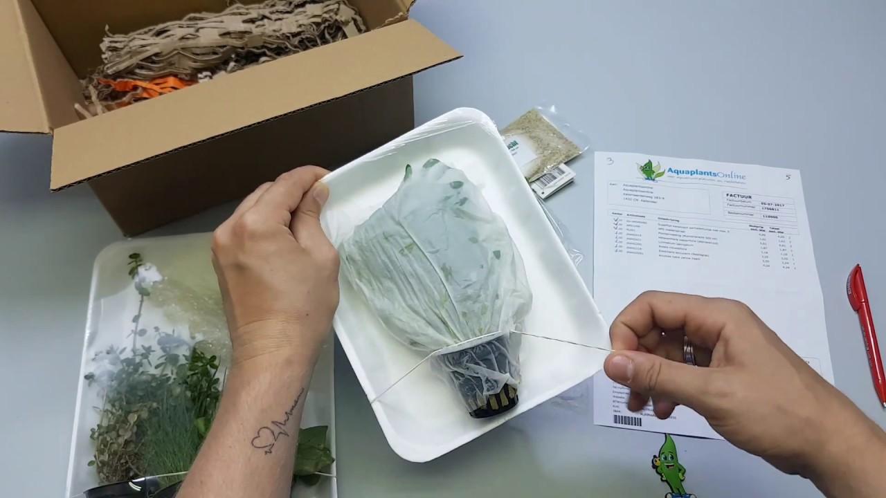 Aquaplantsonline Unboxing Apo Pakket Youtube