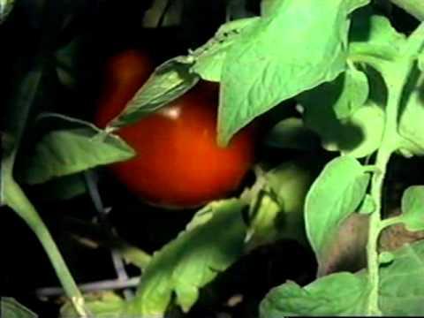 Backyard Conservation YouTube - Backyard conservation