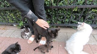 Mom cat, kittens and other cats living in the park are so hungry