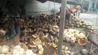 Usaha kelapa
