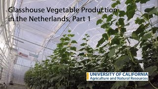 Glasshouse Vegetable Production in the Netherlands, Part 1 thumbnail