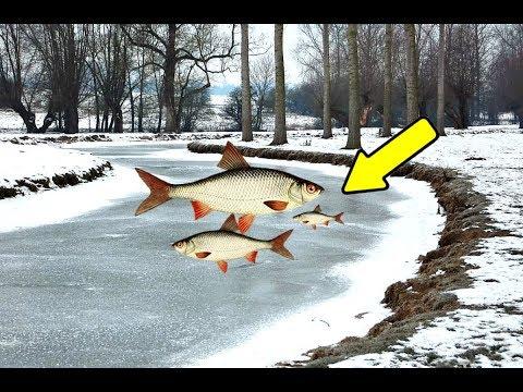 Где искать плотву зимой на реке?