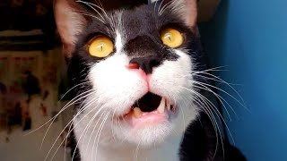 Confused Cat is Adorable | Funny Pet Videos