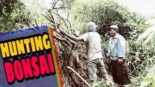 Video Hunting bonsai - Serunya Berburu serut bonsai XXL # part 2 download MP3, 3GP, MP4, WEBM, AVI, FLV Agustus 2018