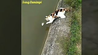 Viral video lucu ngakak kocak hewan kucing yang bingung bahasa indonesia