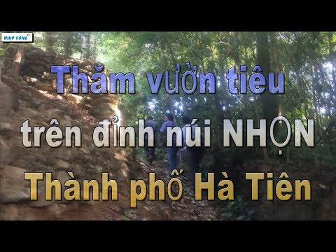 Trồng Hồ Tiêu Trên đỉnh Núi ở Hà Tiên 🔴 NHỊP SỐNG TV