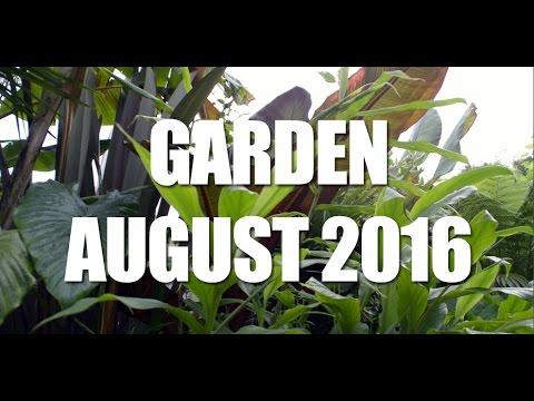 my uk tropical garden august 2016 - Tropical Garden 2016