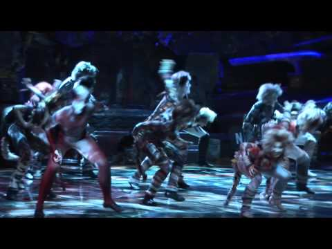 CATS  the musical in Auckland