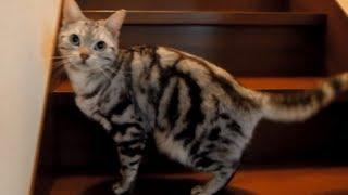 私が旅行から帰ったら他人行儀になった猫-Cat is like a dog, cat was a cat after all