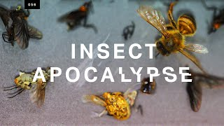 Is the insect apocalypse real?