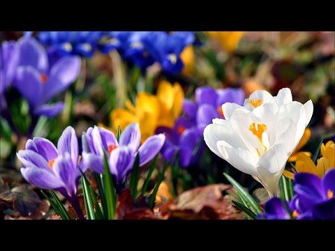 Весна -  Самое Прекрасное Время Года!