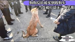 20201115—Dog Rescue in China狗狗反抗被卖到收狗车当众被打却无一人去阻止小伙看不下去了The dog resisted being sold to slaughter,
