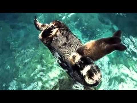 Lisbon Ocean Aquarium Video