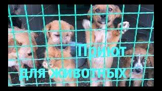 Трогательное видео! Харьковский приют для животных.