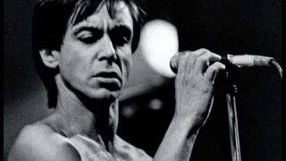 Watch Iggy Pop Talking Snake video