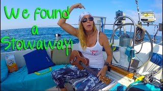 Girl Sailing North Ep. 6 Santa Cruz to Catalina Island