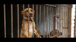 Живые играют с мёртвыми. В Подмосковье нашли приют, где голодают 600 собак