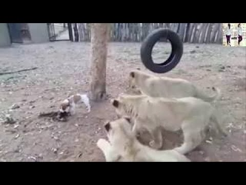 Chota Bacha Samajh Ke Humko Na Samjhana Re   Funny Video   Whatsapp Video