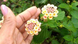 6 Plantas Ornamentais que Fica ate 15 Dias sem Agua