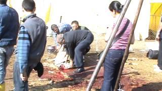 Kurban Kesimi 2012  KKB 01  Sheep slaughter Girl (Selin için çekilmiştir)
