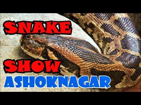 Snake Show at Ashoknagar Millenium Science Park near Habra