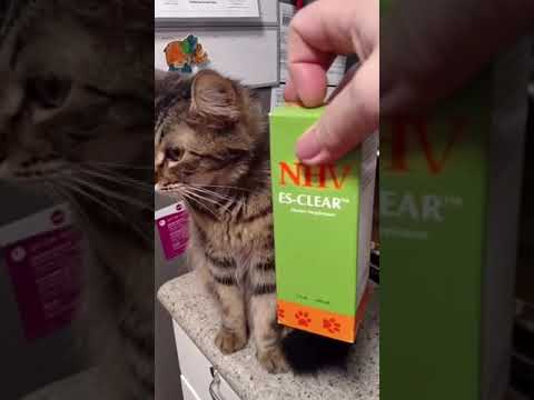 Cooper the cat taking his supplements 1