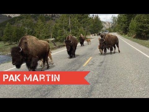 Kamping di Taman Nasional Yellowstone di Amerika, Hari 3 | Vlog 116