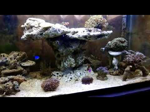 Aquarium laut made indonesia