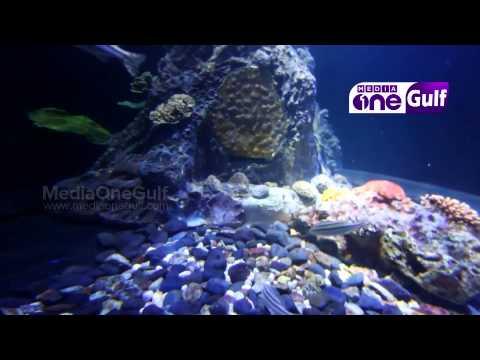 Sharjah Aquarium - Emirates Eye (Epi3 Part1)
