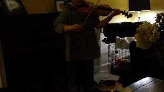 Ramblers Hornpipe And The Crazy Singing Black Mini Schnauzer Daisy