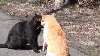 長文です、2015年4月、家の前でなにやら騒がしいので見ると野良猫が喧...