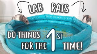 LAB RATS DO THINGS FOR THE FIRST TIME!