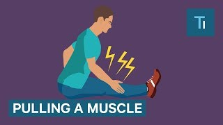 What happens when you pull a muscle