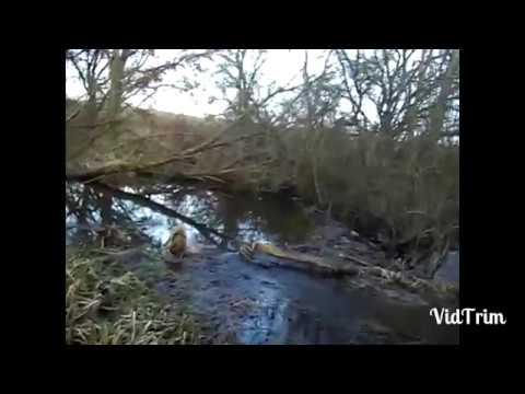 Ловля бобра на капканы на реке