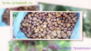 видео Купить саженцы черешни в Украине
