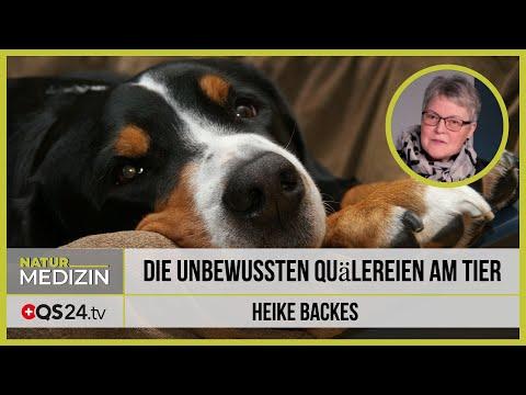 Die unbewussten Quälereien am Tier   NaturMEDIZIN   QS24 23.12.2019