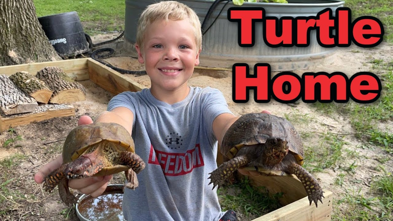 Building Box Turtles a New Outdoor Home