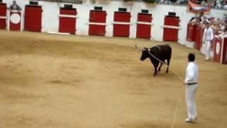 course landaise corne d'or a nogaro le 14.07.2010.(zamora)