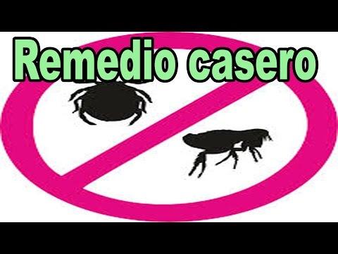 Remedios caseros para eliminar las pulgas de la casa doovi - Como eliminar las pulgas de casa remedio casero ...