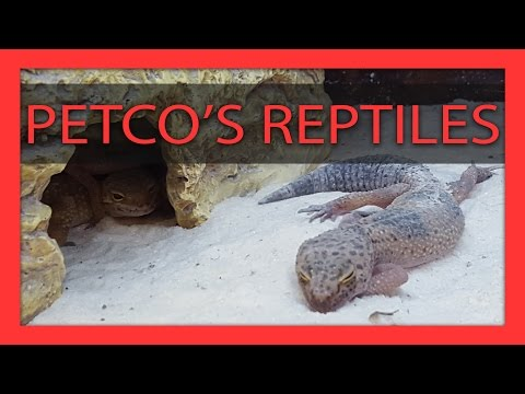 Why You Should NOT Buy Reptiles from Petco - YouTube