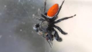 Spider Food | Beastt17